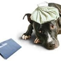 hondsebelasting