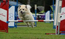 Start agility beginners Medium/Small op 16 april